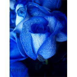 عکس کاغد خود کپی / بدون کاربن ( کاربن لس )کاغذ رول کاربن لس CFB آبی