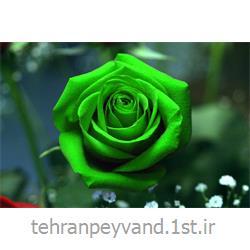 عکس کاغد خود کپی / بدون کاربن ( کاربن لس )کاغذ رول کاربن لس CFB سبز
