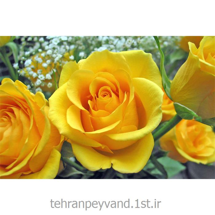 عکس کاغد خود کپی / بدون کاربن ( کاربن لس )کاغذ رول کاربن لس CF زرد