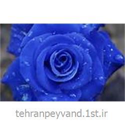 عکس کاغد خود کپی / بدون کاربن ( کاربن لس )کاغذ بند کاربن لس CFB 60*90 آبی
