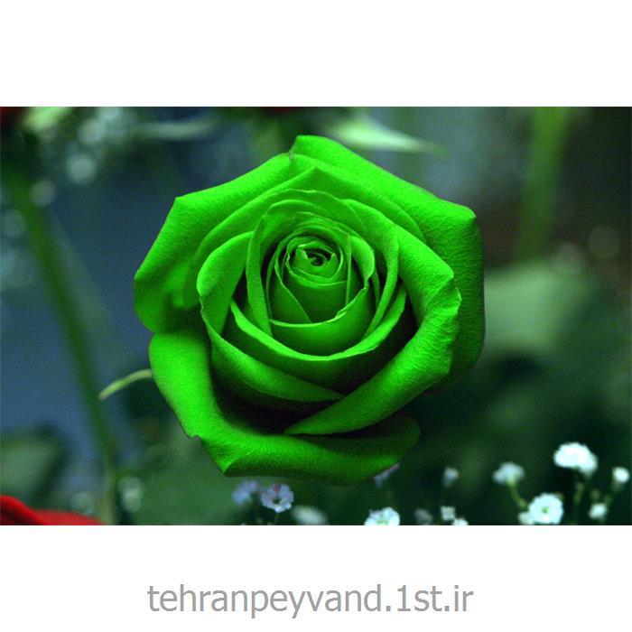 عکس کاغد خود کپی / بدون کاربن ( کاربن لس )کاغذ بند کاربن لس CFB 60*90 سبز