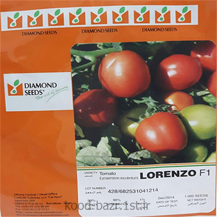 بذر گوجه فرنگی فضای باز لورنزو ( lORENZO )