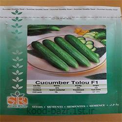 عکس بذر سبزیجاتبذر خیار زودرس هیبرید فضای باز طلوع ( TOLOU )