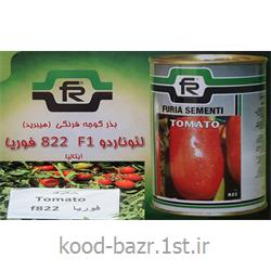 عکس دانه، بذر و نهال گلبذر گوجه هیبرید822 فوریا ایتالیا
