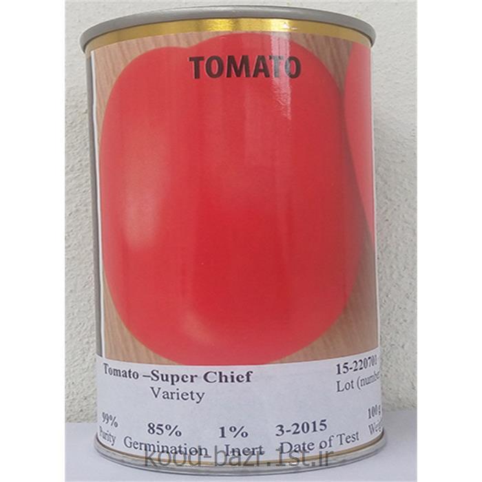 عکس گوجه فرنگیبذر گوجه فرنگی سوپرچف آمریکا ( super chef )