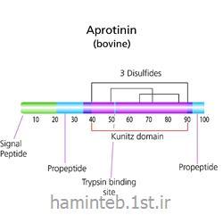 آپروتینین سیگما 1153