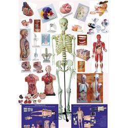 مولاژ (مانکن - مدل آناتومی) آموزشی انسان و حیوان