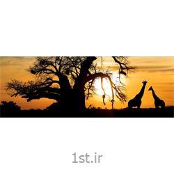 تور 10 شب آفریقای جنوبی ویژه نوروز 97