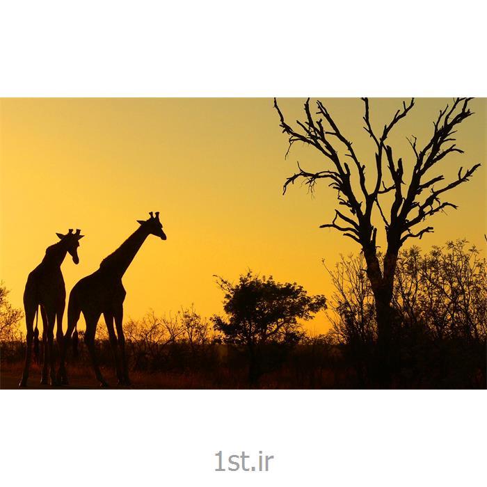 تور آفریقای جنوبی 11 شب ویژه نوروز 97