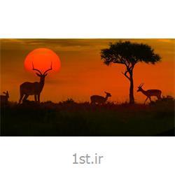 تور 11 شب افریقای جنوبی ویژه نوروز 97