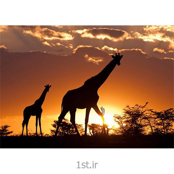 تور 10 شب و 11 روز آفریقای جنوبی ویژه نوروز