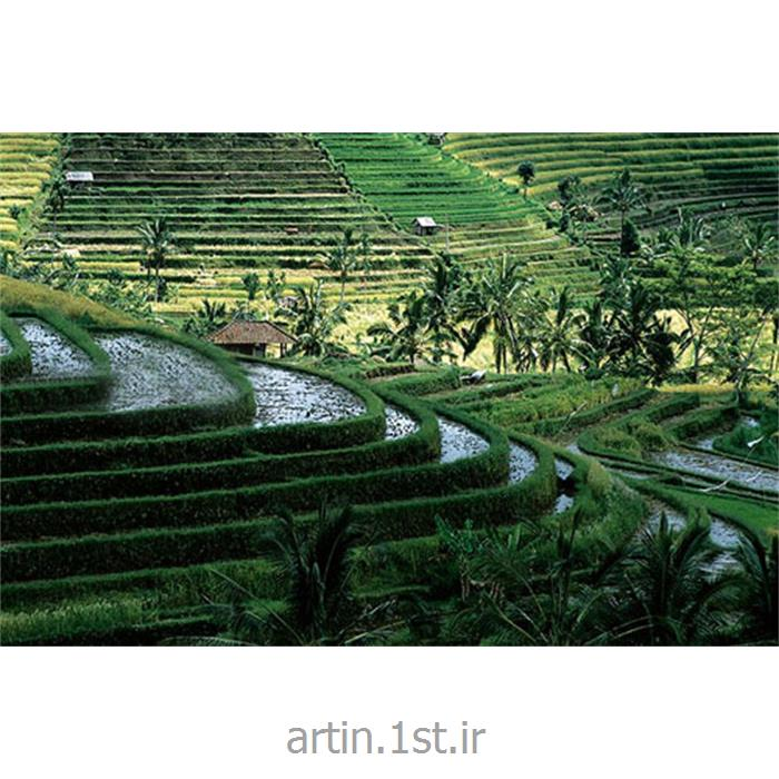 تور بالی اندونزی نوروز 93