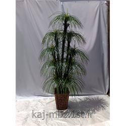 درختچه نخل مرداب 9 شاخه (palm)