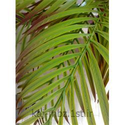 عکس گل و گیاه مصنوعیبرگ مصنوعی کنتیا سبز (kentya)