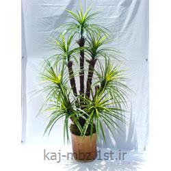 درختچه آناناس 7 شاخه (palm)