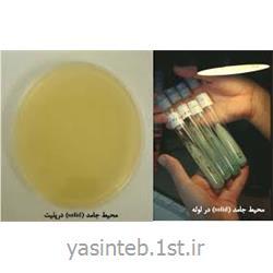 محیط کشت باکتریولوژیک آگار آمریکایی  500 gr  کاندا هیسپان پرونادیسا