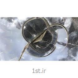 عکس قیر طبیعیقیر مخلوط ( شل و سفت ) بشکه 220 لیتری