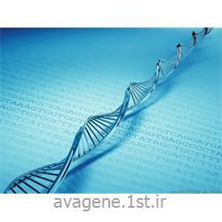 کیت استخراج DNA ژنومیک گیاهی