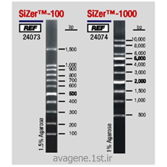 مارکر یا نشانگر مولکولی دی ان ای DNA Ladder100bp