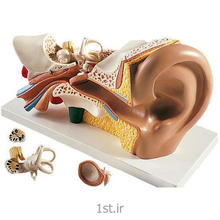 عکس علوم پزشکیمدل آناتومی PVC چهار تکه گوش