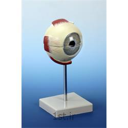 مدل چشم PVC با ماهیچه و بدون ماهیچه