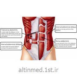 دستگاه تقویت عضلات کور