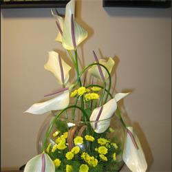 عکس شاخه گل تازهتنگ شیشه ای،آنتوریوم،داودی مینیاتوری،2939