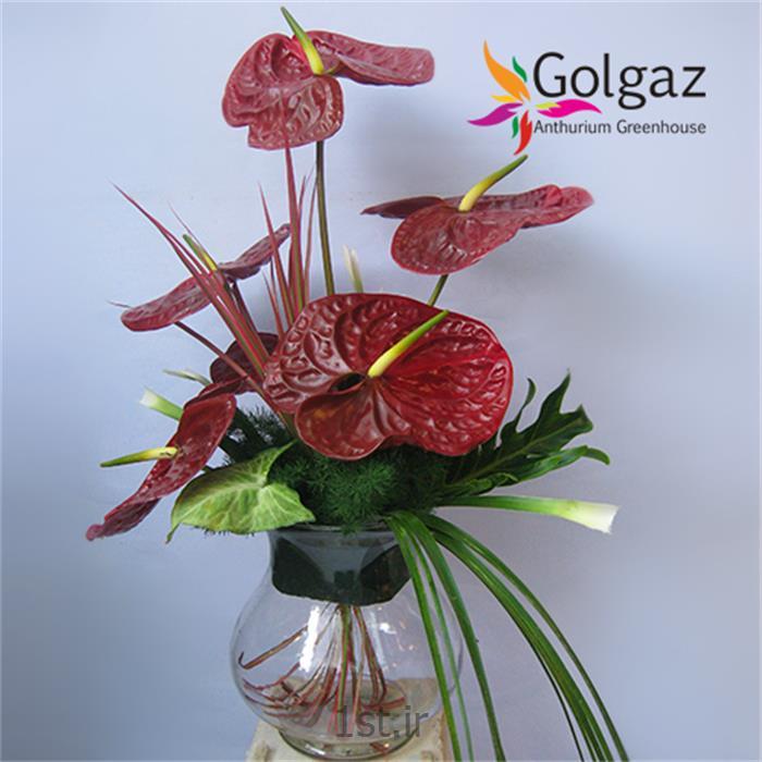 عکس شاخه گل تازهتنگ شیشه ای،آنتوریوم،مدل 2762