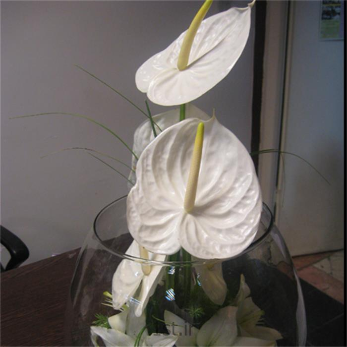 عکس شاخه گل تازهتنگ شیشه ای،آنتوریوم،لیلیوم مدل 2910