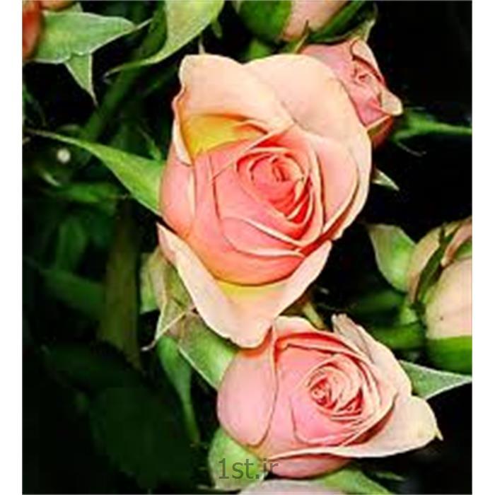 کاشت و نگهداری انواع گل و گیاه فصلی