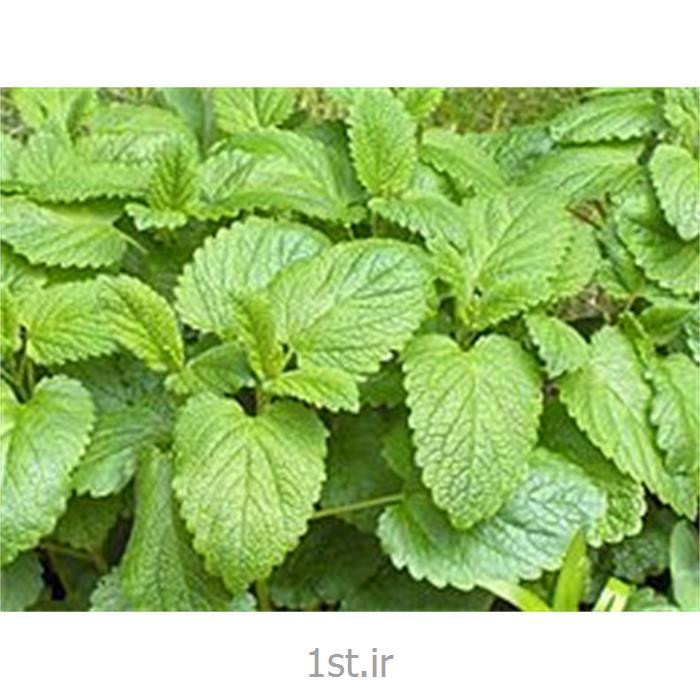 عکس سایر محصولات کشاورزیملیس ( خواص دارویی ملیس )