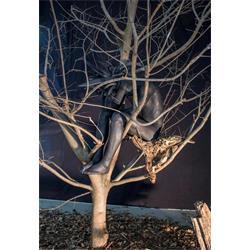 عکس مجموعه ( ست ) لوازم هنرینگارخانه کمال ، نمایشگاه گالری هنر تجسمی