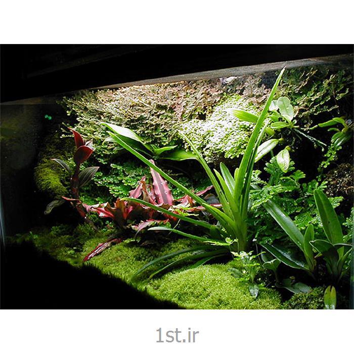 عکس سایر خدمات طراحیطراحی و اجرا تراریوم terrarium