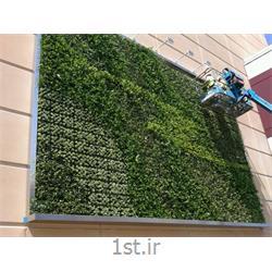 طراحی و اجرا دیوار سبز greenwall