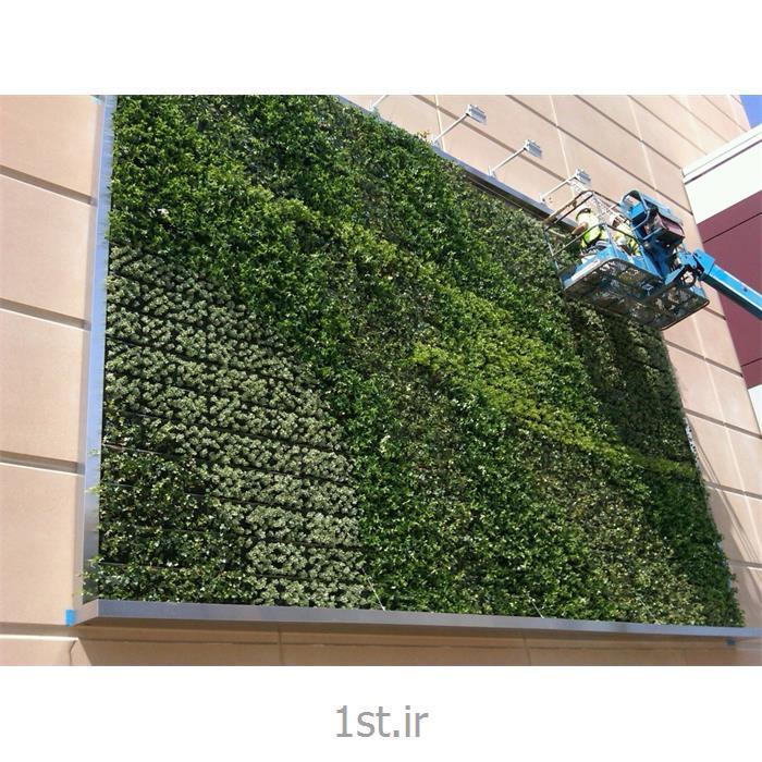 عکس سایر خدمات طراحیطراحی و اجرا دیوار سبز greenwall
