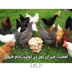 مکمل مرغ تخمگذار تولید شیور