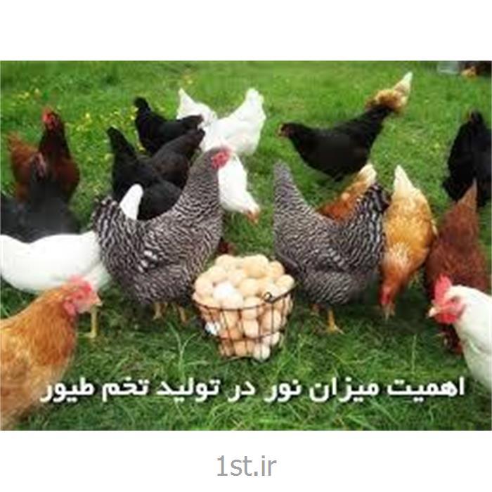 مکمل مرغ تخمگذار فرمول سازمان