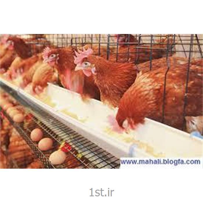 مکمل مرغ تخمگذار تولید ال اس ال