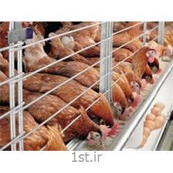 مکمل مرغ تخمگذار تولید های لاین