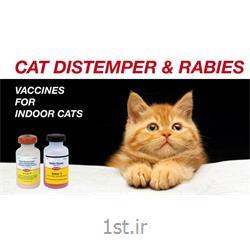 واکسن سه گانه گربه